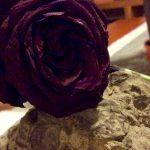 La rosa y la bestia Lucía Nuñez