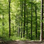 bosque-caducifolio-300x200